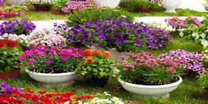 project-amenities-landscape-garden-adityaraj-avenue-adityaraj-group-kannamwar-nagar-2-vikhroli-east-mumbai-maharashtra
