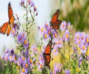 butterfly-garden-amenities-raunak-urban-centre-raunak-group-adharwadi-khadakpada-kalyan-west-thane-mumbai-maharashtra