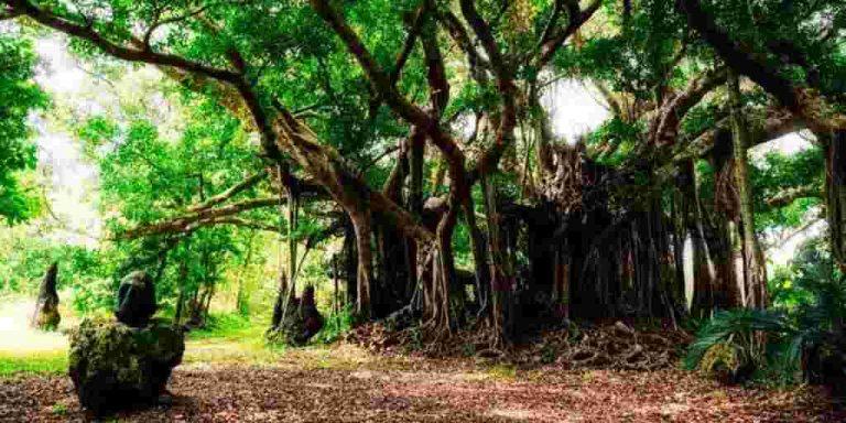 forest-green-amenities-lodha-amara-codename-green-fortune-lodha-group-kolshet-road-thane-west-maharashtra