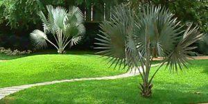 landscaped-garden-amenities-florence-satguru-lifespaces-ghodbunder-road-thane-west-maharashtra