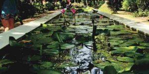 lotus-pond-amenities-tata-serein-tata-housing-pokhran-road-thane-west-mumbai-maharashtra