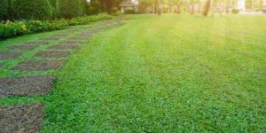 open-green-spaces-amenities-lodha-codename-rare-gem-lodha-group-majiwada-thane-mumbai-maharashtra