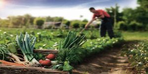 organic-farm-amenities-poddar-riviera-poddar-housing-murbad-road-shahad-kalyan-west-thane-maharashtra
