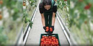 organic-garden-amenities-tata-serein-tata-housing-pokhran-road-thane-west-mumbai-maharashtra