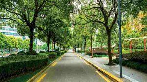 tree-lined-street-amenities-lodha-crown-taloja-lodha-quality-homes-lodha-group-taloja-navi-mumbai-maharashtra